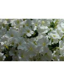 Veranda White
