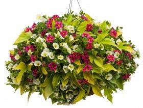 Jak opiekować się roślinami?