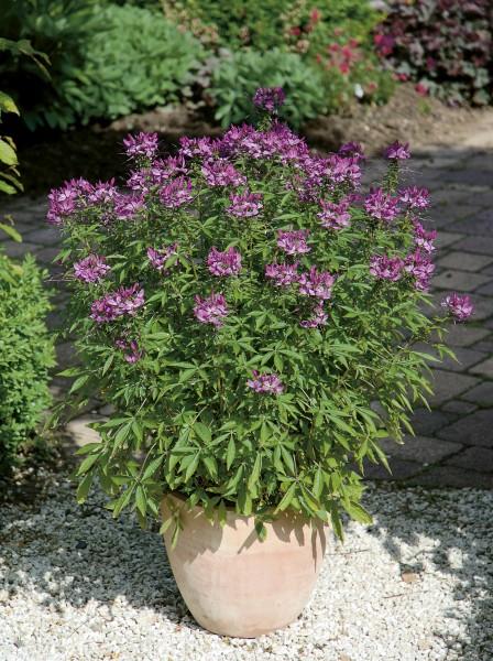 Jak nawozić rośliny?