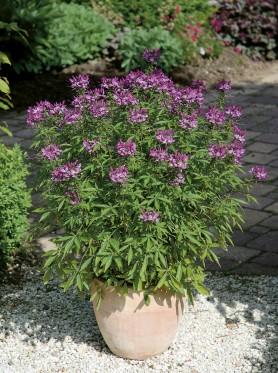 Jak nawozić rośliny