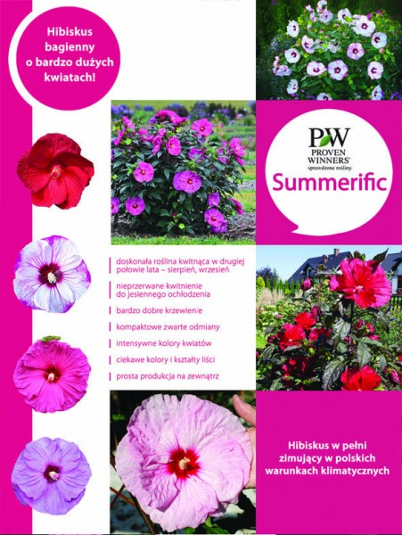 SUMMERIFIC - niezwykły hibiskus byliniwy