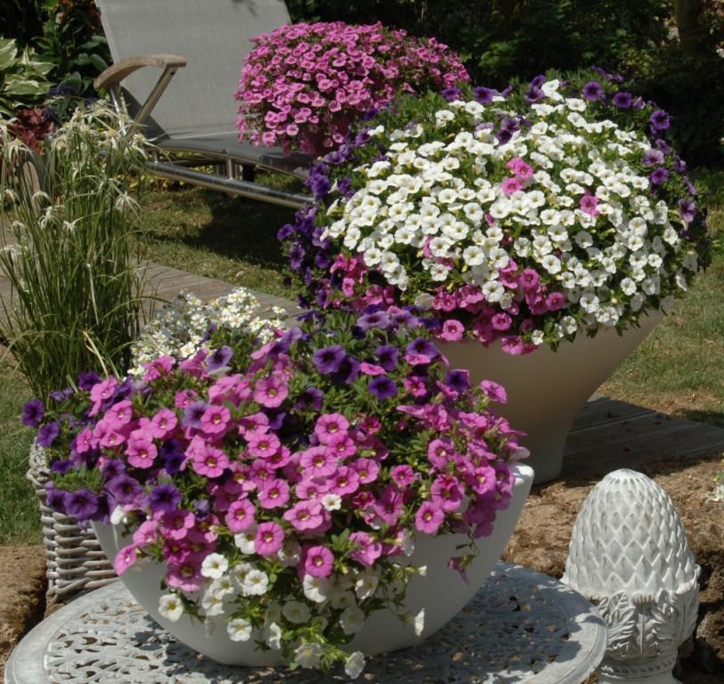 Rośliny balkonowe i rabatowe