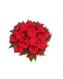 Impatiens NG Papete Red