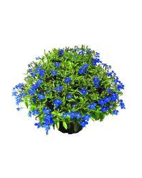 Lobelia Lobelix Dark Blue