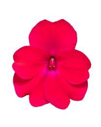 Sunpatiens Compact Rose Glow
