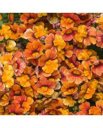 Sunsatia Blood Orange