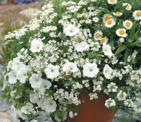 Jak prawidłowo podlewać rośliny?