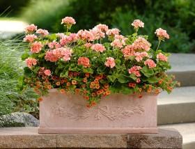 Jakie pojemniki wybrać do sadzenia roślin?
