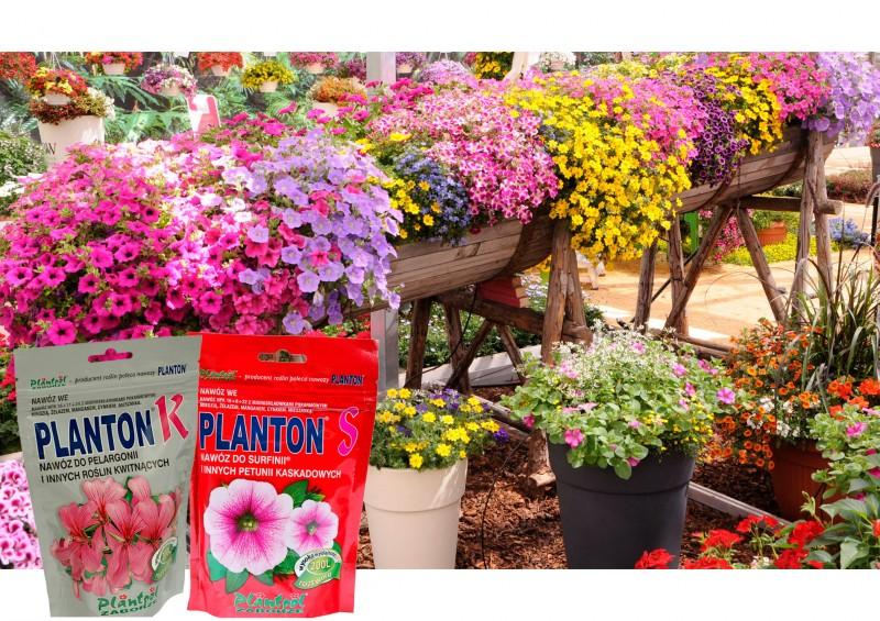 Planton - pamiętajmy o nawożeniu roślin