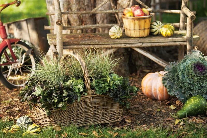 Przygotowujemy ogród do zimy